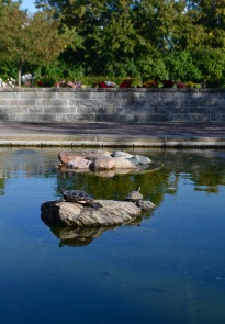 TURTLES @ Limhamn Cemetery